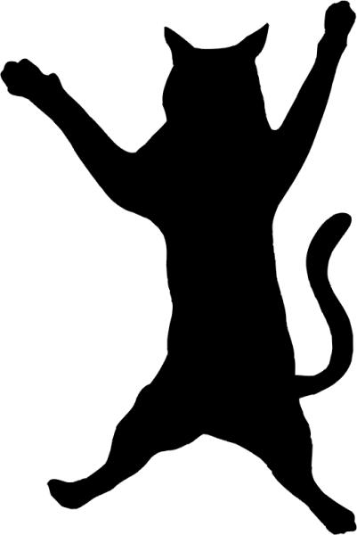 Katze »Rocky«